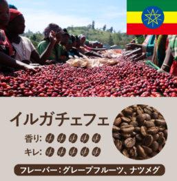エチオピア産コーヒー豆 イルガチェフェFLO